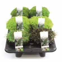 Moss mix p13 scheef 20-9