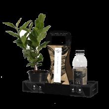 ice-tea-3-pack-icetea